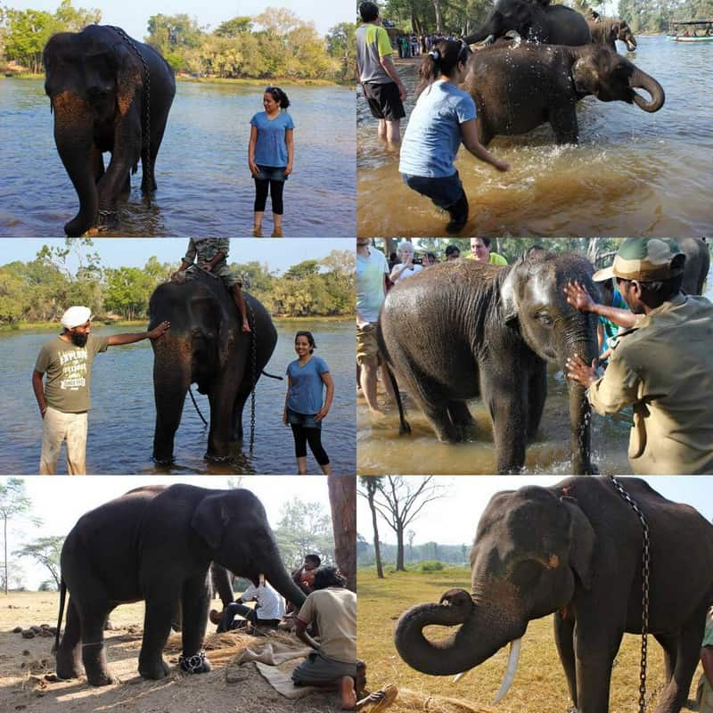 Dubare Elelphant Camp