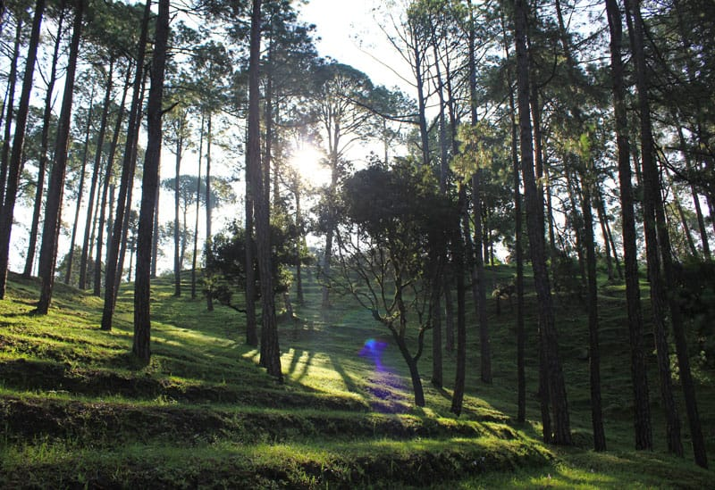 Holidays are simply roughly the corner together with shortly families volition start packing for the annual su Best Summer Holiday Ranikhet, Uttarakhand