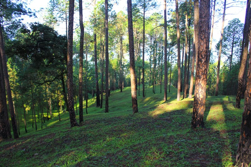 Ranikhet in the Kumaon region is the queen of hill stations in Uttarakhand. Read more about the best summer holiday in Ranikhet, Uttarakhand.